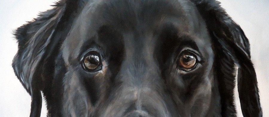 Drawing Dog Eye finished