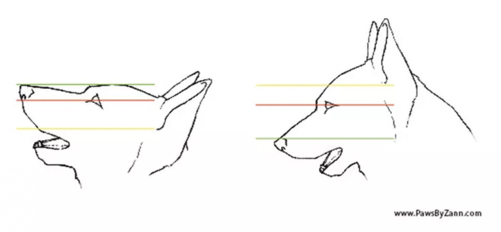 how to draw dog eyes from the side