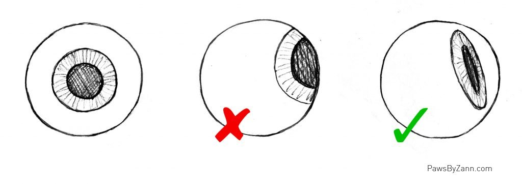 How to draw eyeball structures