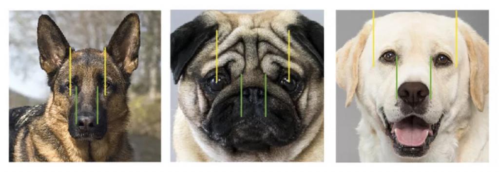 realistic dog eye drawing tutorial