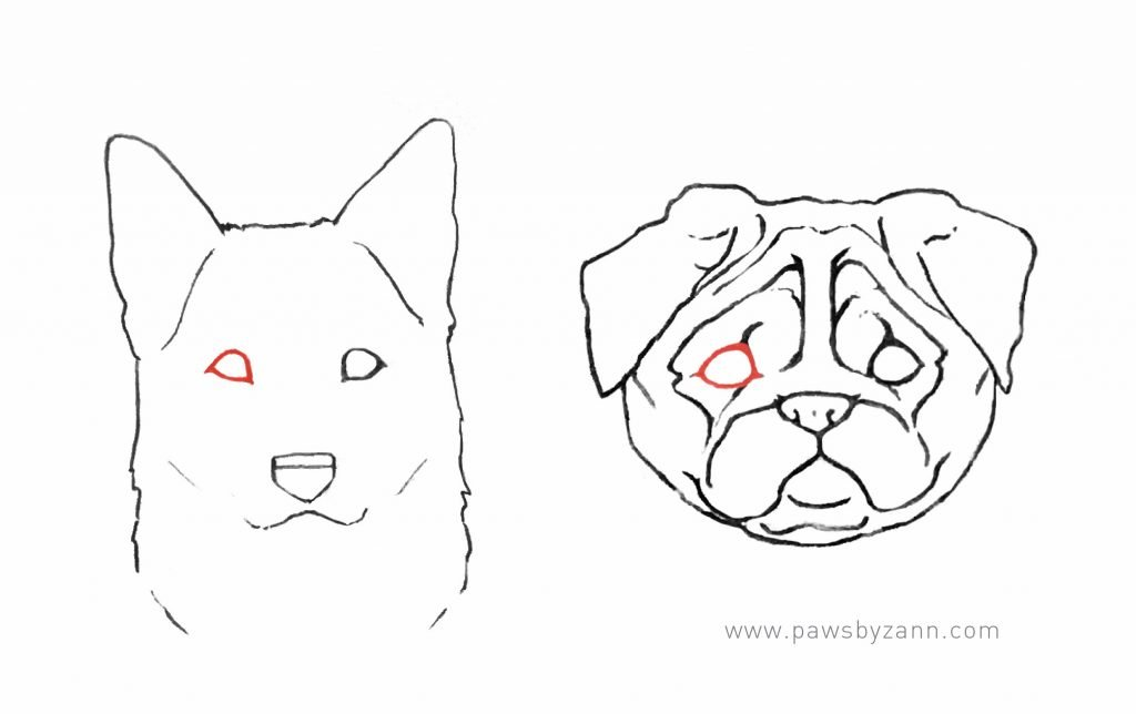 drawing the shape of a dog eye