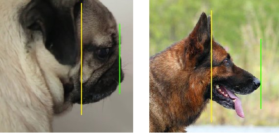 drawing dog eyes from the side