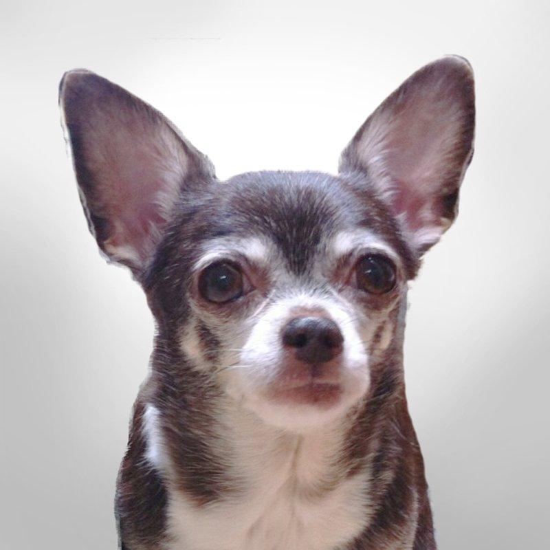 Chihuahua art painting mockup