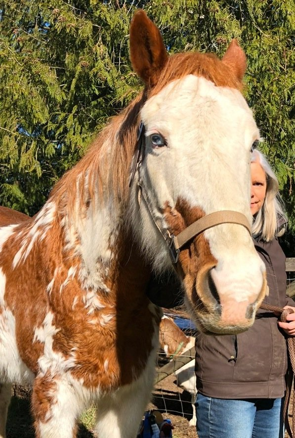 Horse Pet Portrait from Photo