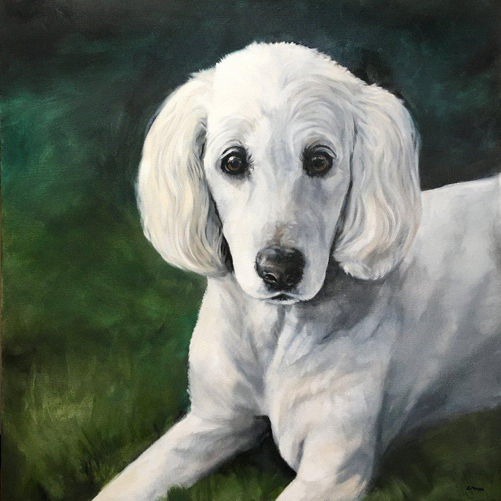 Pet Art Poodle Dog Painting in Oil Portrait