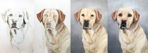 Dog Portrait Painting Process