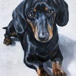Dashchund Painting Dog Portrait