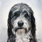 Pet Art painting of a Bernedoodle by animal artist Zann Hemphill