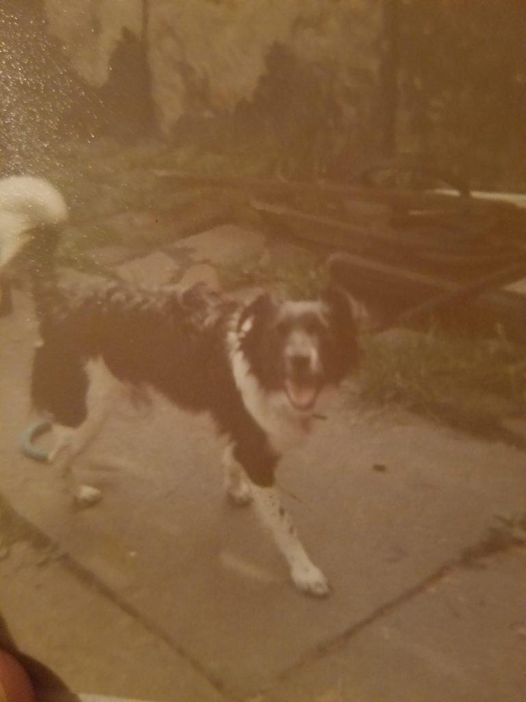 Custom Dog Art Painting Reference