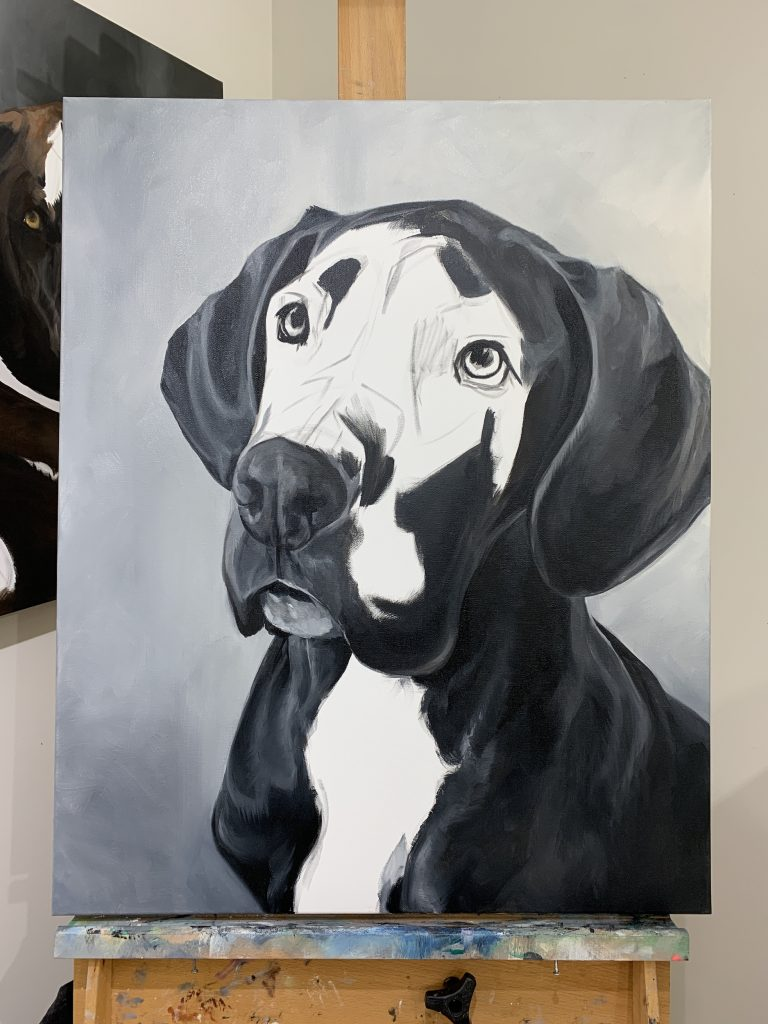 Portrait art process of Buddy the Great Dane, a black dog painting in oils