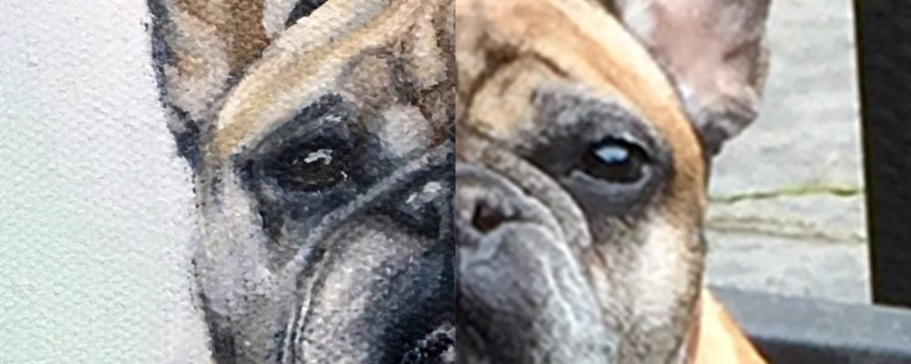 dog portrait from photo before after