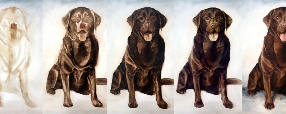 steps stages dog portrait process
