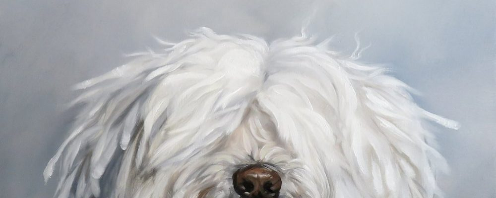A Shaggy Dog Story in Not so many words crop