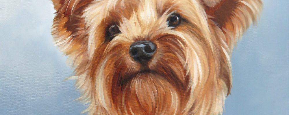 ZH Yorkshire Terrier croppy